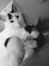 cats baw.jpg