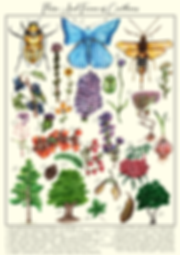 Flora And Fauna Print, a print including Scottish insects, plants, flowrs, tree's and berries.