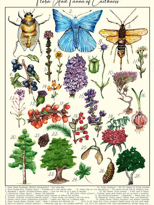 Scottish Flora & Fauna Fact Sheet