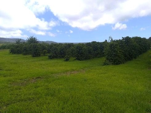cof hillside.jpg