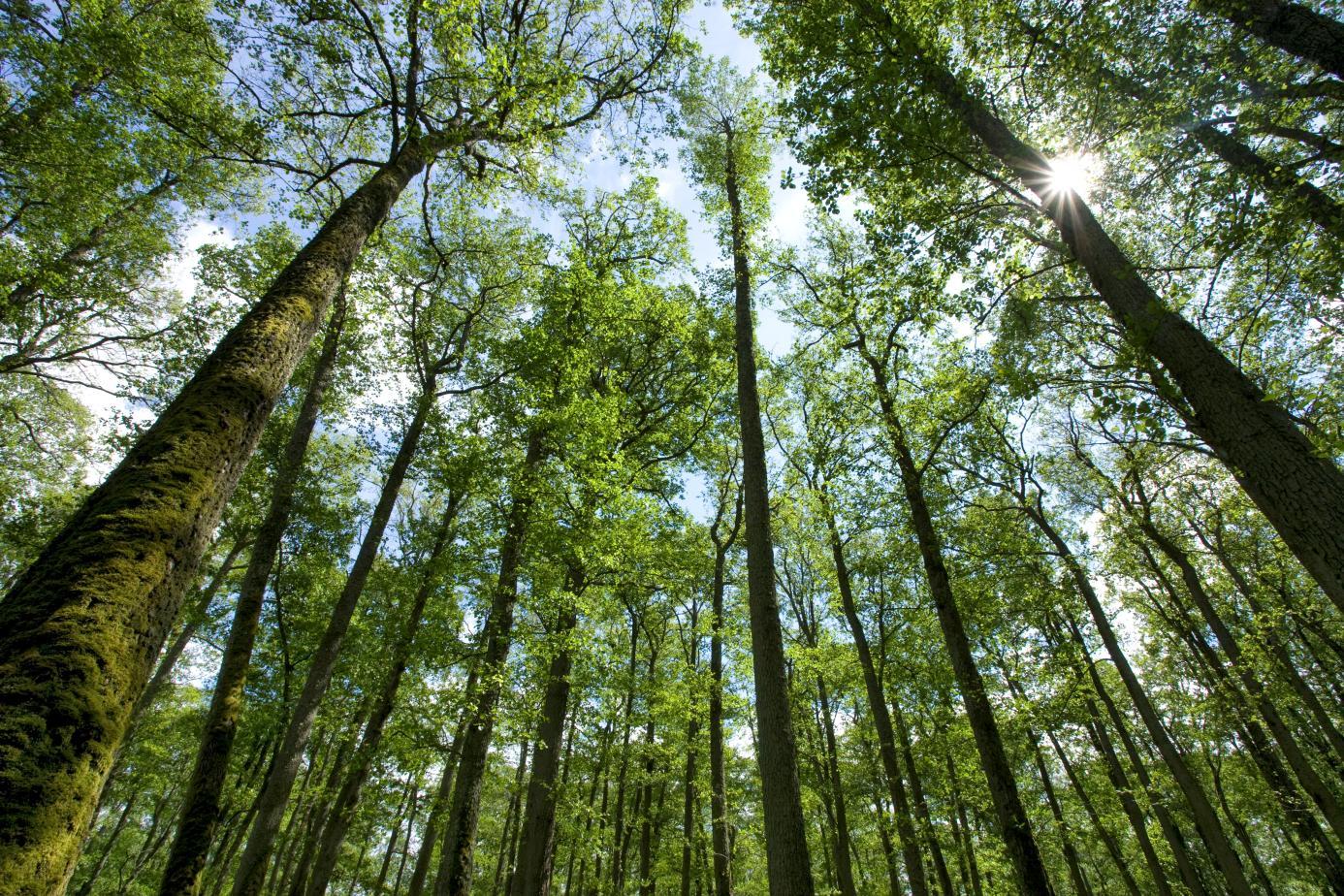 EEB-GreenProcurement-trees