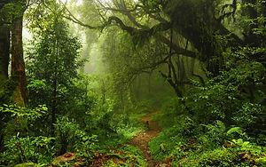 jungle-05.jpg