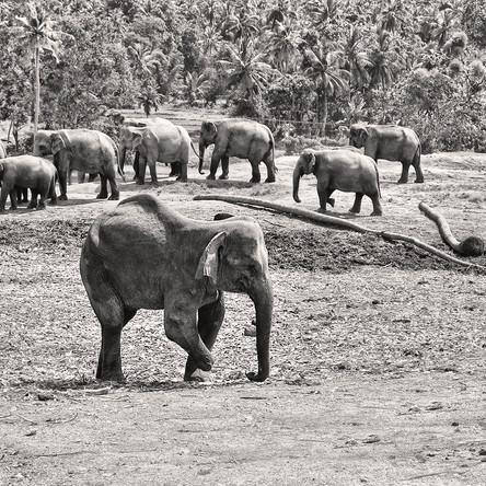 Go on Couch Safari Wildlife Streaming from Sri Lanka