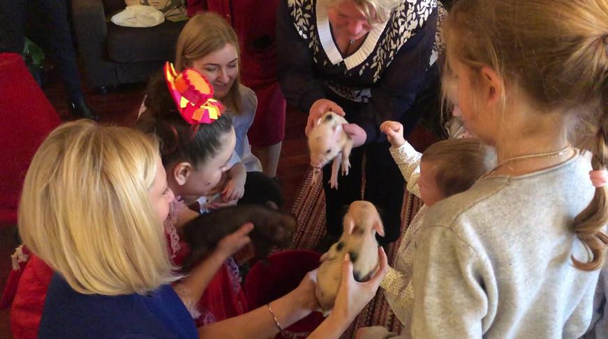 маленькие мини пиги шоу с животными.MOV