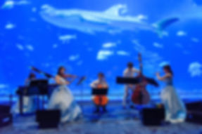 okinawa-churaumi-aquarium-1_edited.jpg