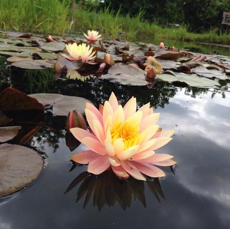 Sockety pond