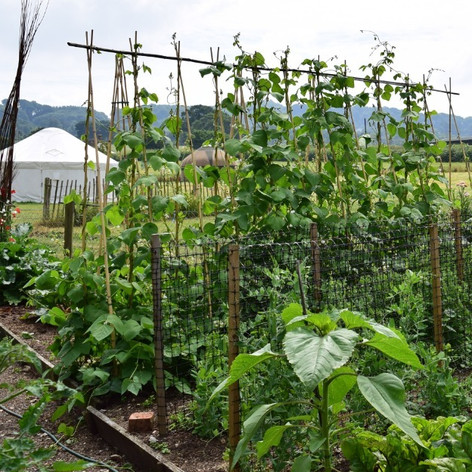 Sockety vegetable patch