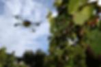 vinograd_vino.png