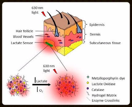 Lactate Biosensor paper now online