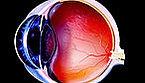 retinal ganglion.jpeg