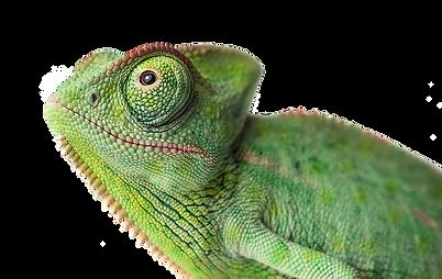 Kameleon-header_edited.png
