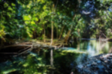 Daintree-Rainforest-Creek-Oil-1024x683.j