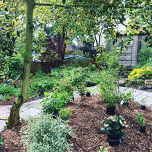 Garden plants and planting plans