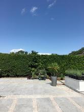 Contemporary Garden Design - The Gardensmith