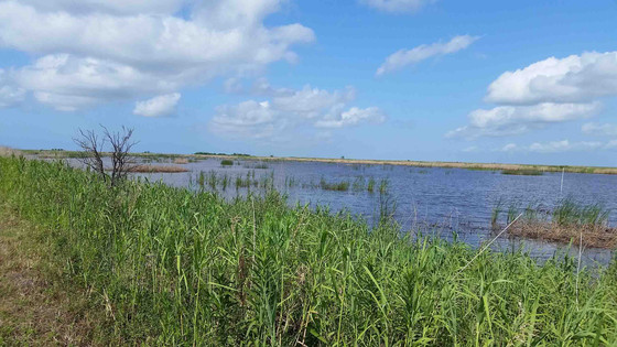 EcoSystem Renewal LLC and CSRS Selected for Louisiana Coastal Restoration Bids