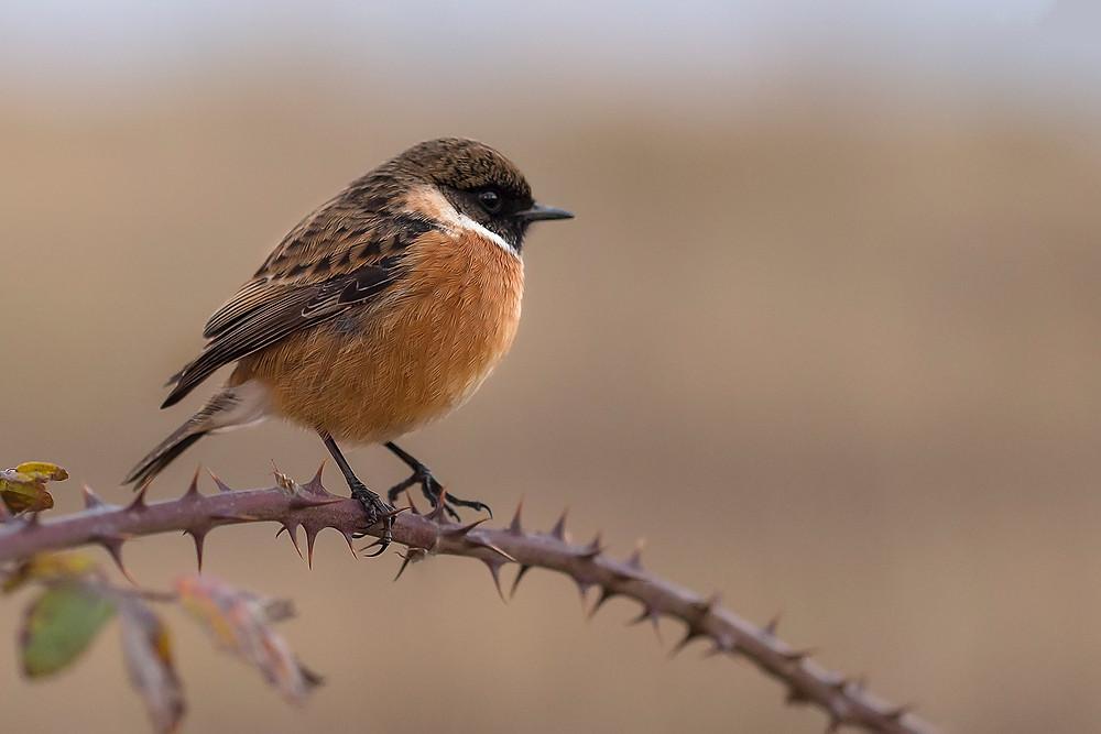bird on thorny branch