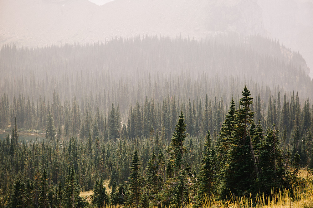 Montana trees with smoke from wildfire