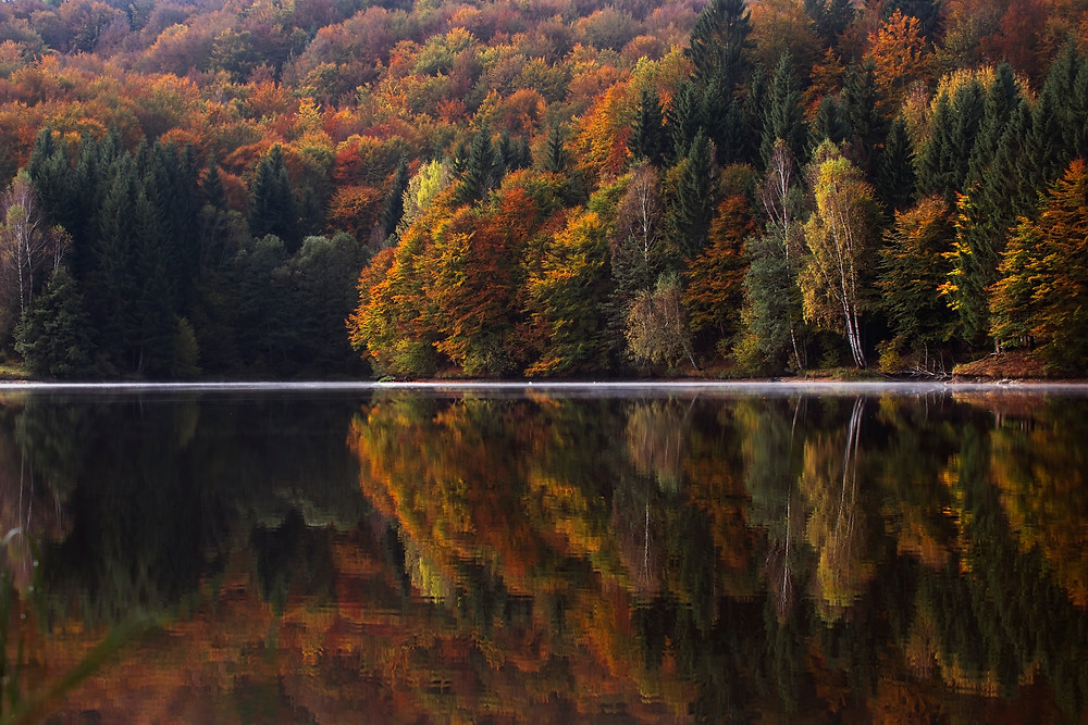 Fall foliage reflecting in water