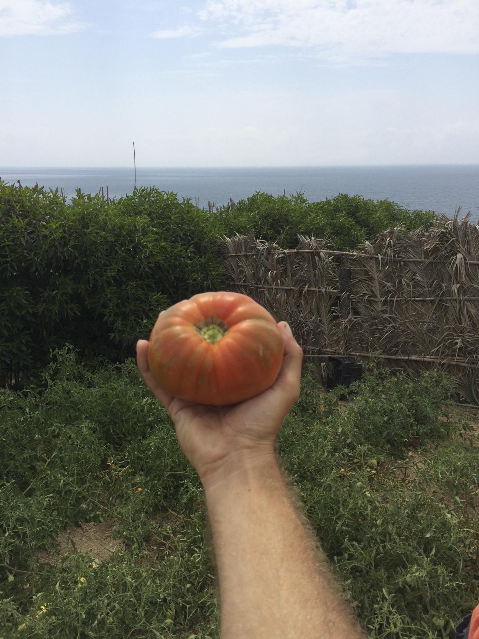 A real tomatoe