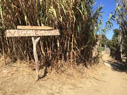 This way to the veggie garden