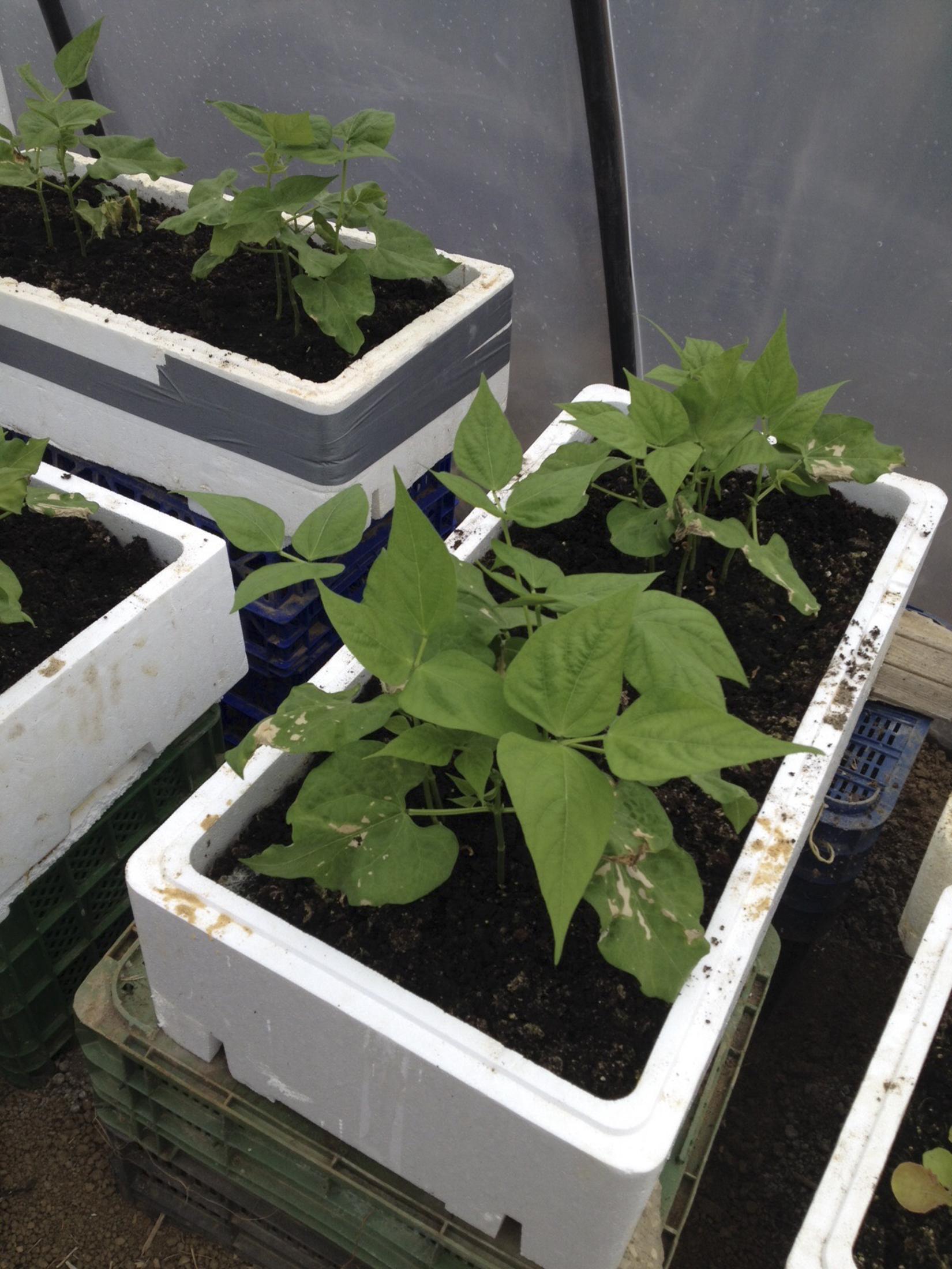 Organic Vegetables Tarifa