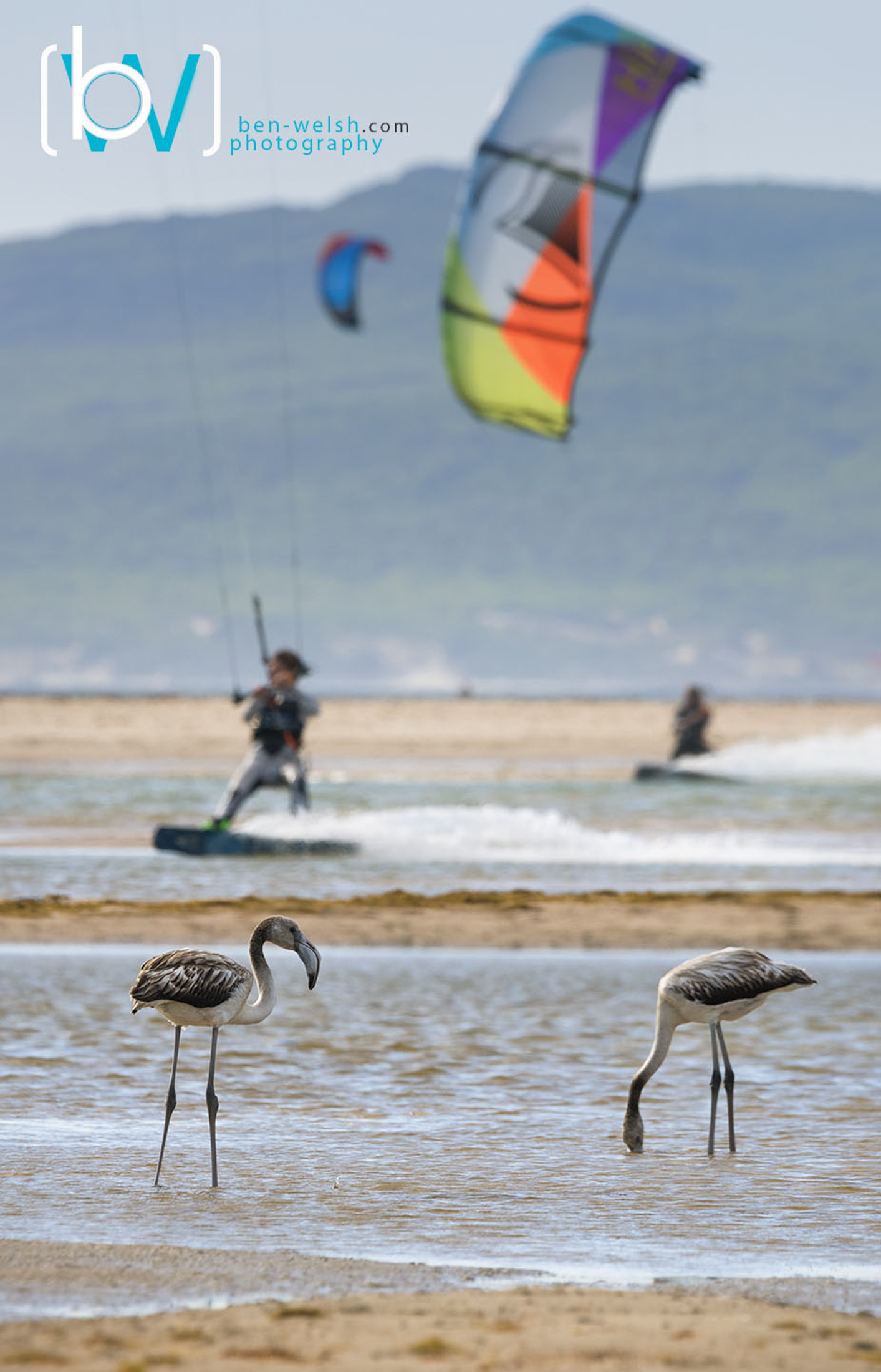 Bird Watching Tarifa