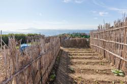 View from Tarifa Vegetable garden