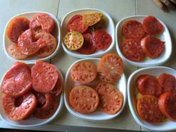 Super tasty Organic Tomatoes