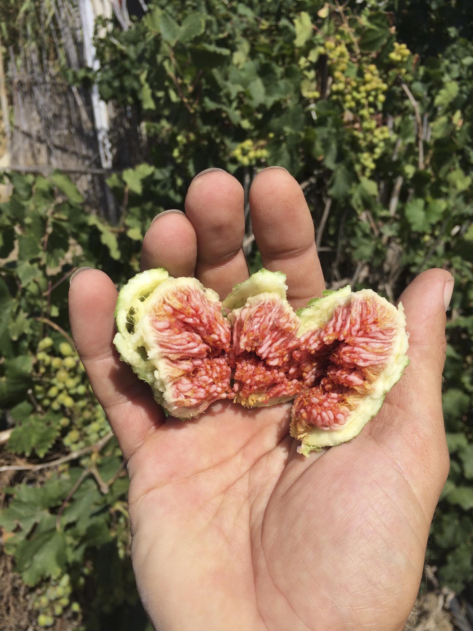 Tarifa organic fruit
