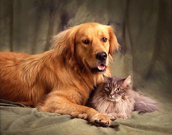 friends-for-life-32579711.jpg
