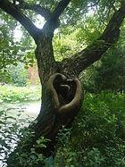 amour+arbre.jpg