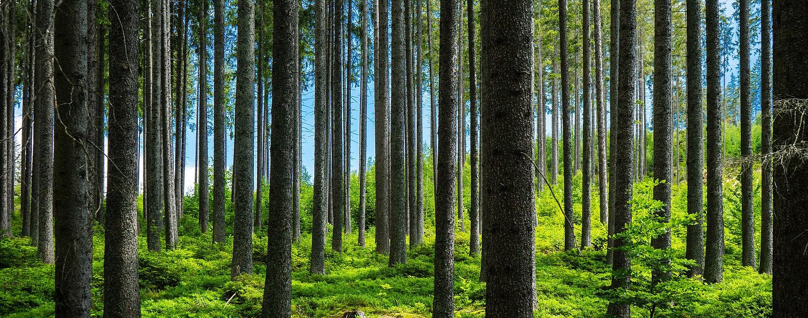 forest-5323328_1920.jpg