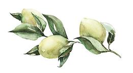 Olives 2.png
