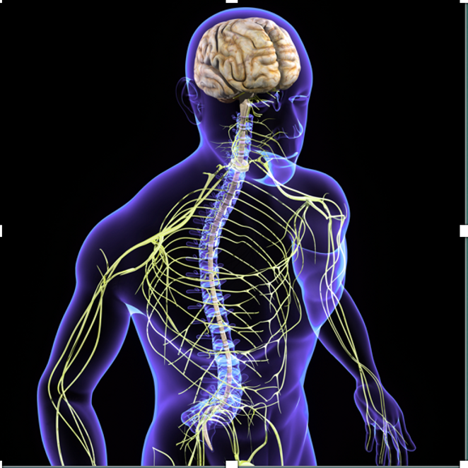 FT3 NFM Neurofascial Mobilisation