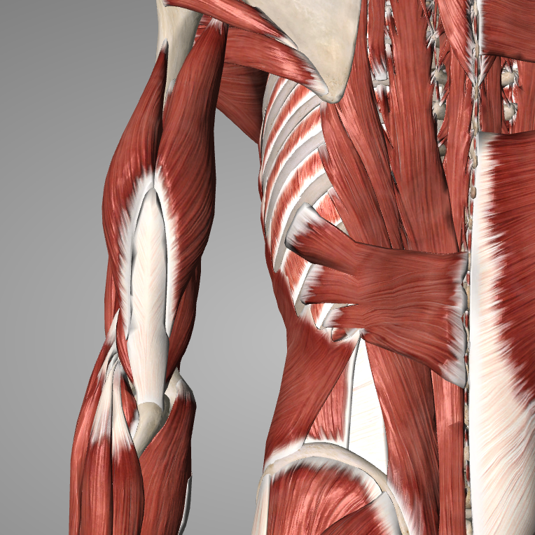 Fascial Therapy FT4 Spine, Scapula and Thorax