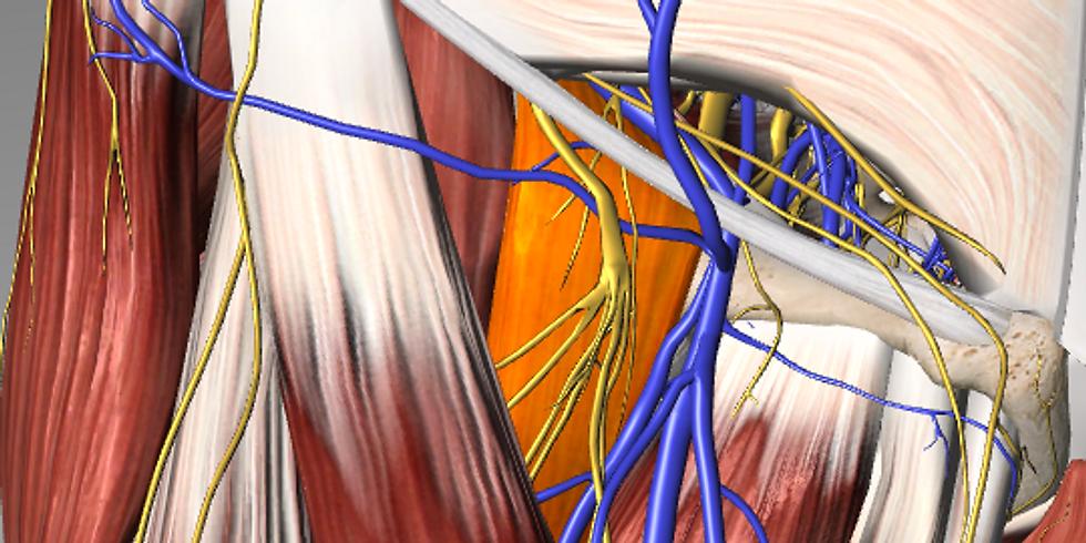 Massage andMyotherapyAustralia - Advanced MFR -Deep Front Line