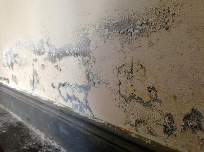 Rising damp in bricks - paint destabilizing from salts travelling through render
