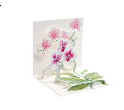 Dragonfly & Orchid  ..... Mini Pop-Up 3D Card