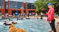 Doggy Splash Day