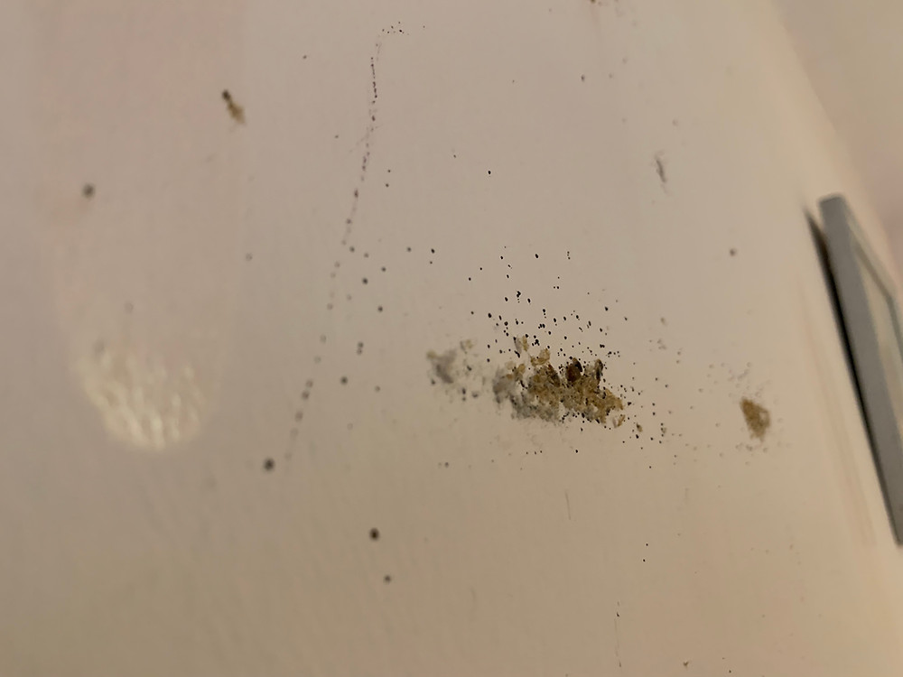 A collections of Bed Bug Exoskeletons found in a bedroom by Pure Pest Solutions