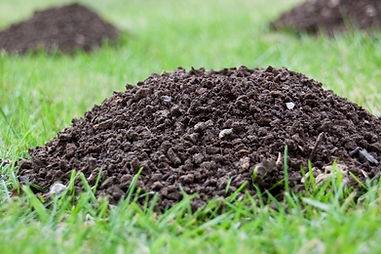 Molehills in an english garden.jpg