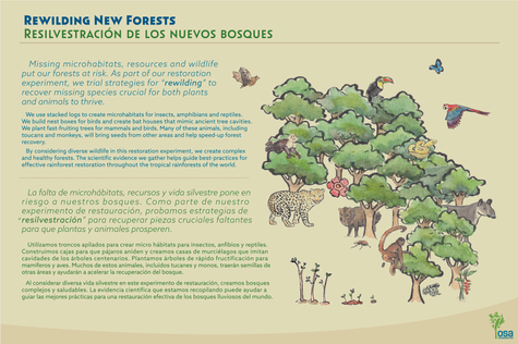 Rewilding New Forests