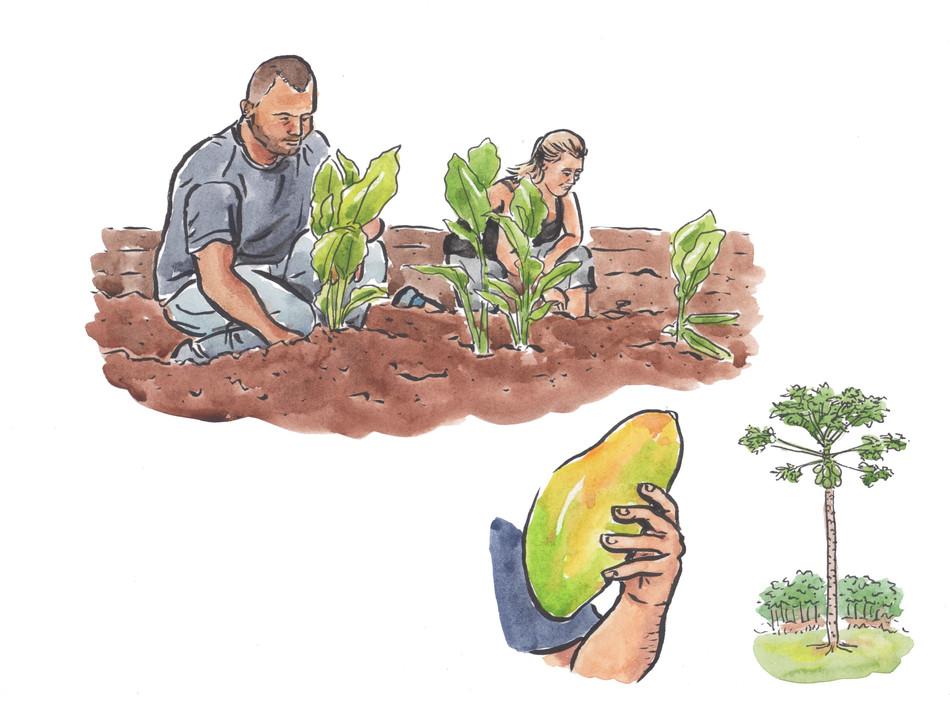 Osa Verde Farm