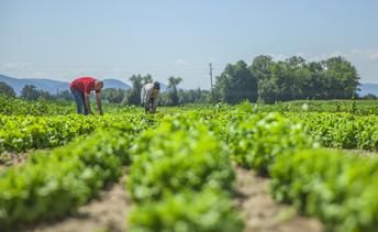 Agricultores familiares de mais 10 municípios de MS podem aderir ao PAA