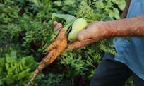 70 mil famílias de pequenos agricultores contam com assistência técnica dos profissionais da Agraer
