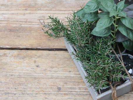 Ervas aromáticas: o que são e quais você precisa ter em casa?