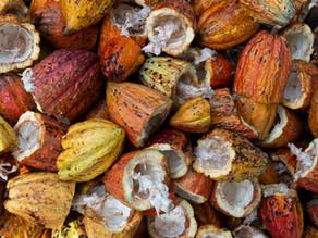 Alimentos do povo Maia: o que eles cultivavam e comemos ainda hoje