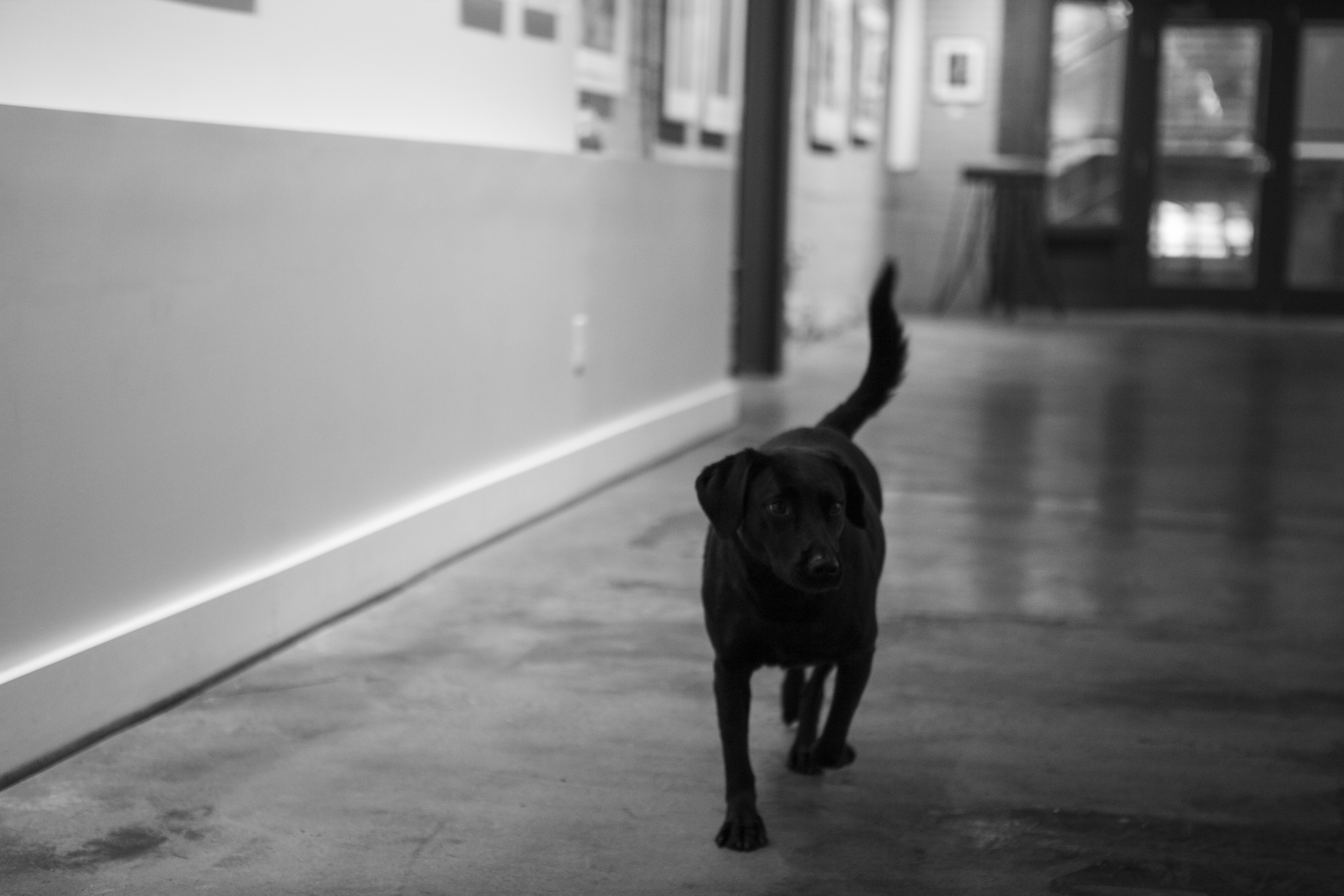 Luna, Gallery Dog
