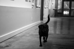 Luna, Gallery Dog