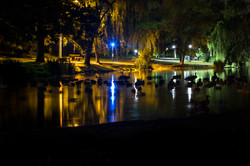 Duck Pond at Night